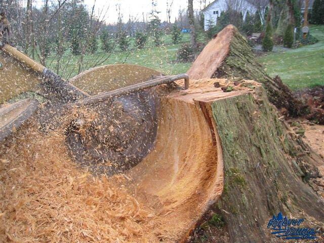 stump_grinding2